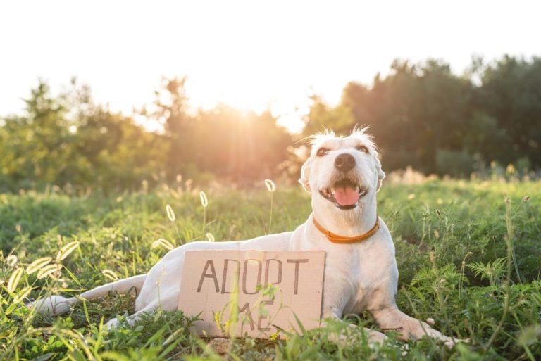 pet-adoption.jpg