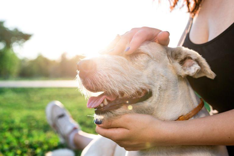 pet-care-pet-adoption-young-woman-hugging-her-mixed-breed-dog.jpg