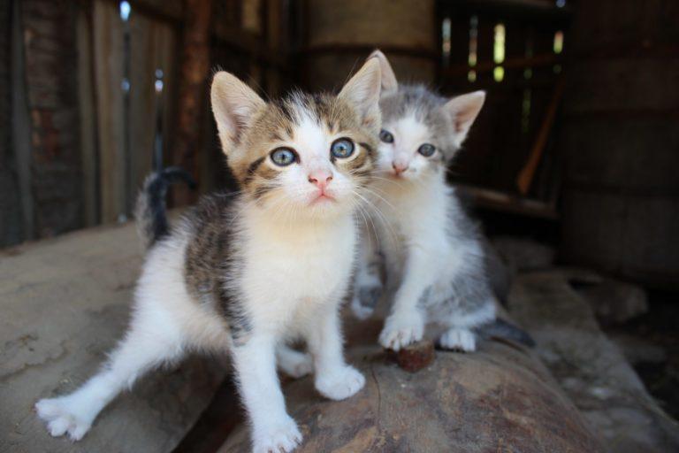 two-little-cats.jpg
